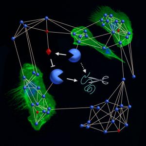 Protease Web